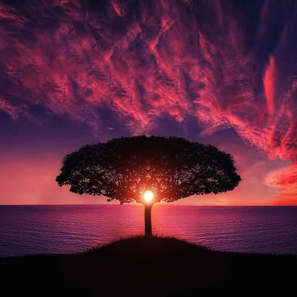 healing_0003_amazing-animal-beautiful-beautifull